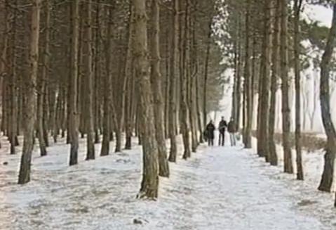 На Машуке массово уничтожают деревья. Более 500 деревьев под угрозой Машук, Вырубка, Чиновники, Коррупция, Предательство, Видео, Негатив