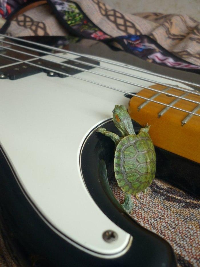 Покойся с миром, друг. Красноухая черепаха, RIP, Друг, Длиннопост