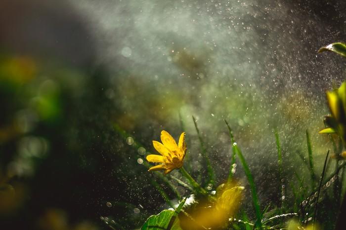 Минутка весны. Цветы, Весна, Солнце, Природа, Красота природы, Фотография, Canon, Макро