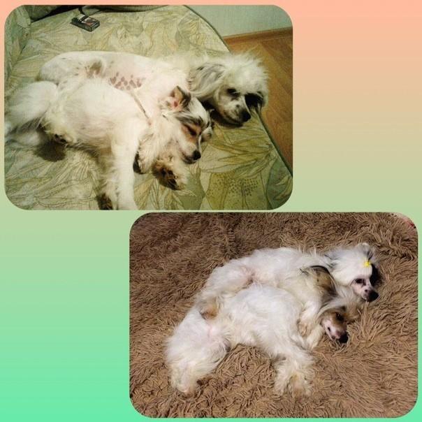 Энди и Фредди. Собаки и люди, Собака, Животные, Лечение, Ветеринар, Длиннопост