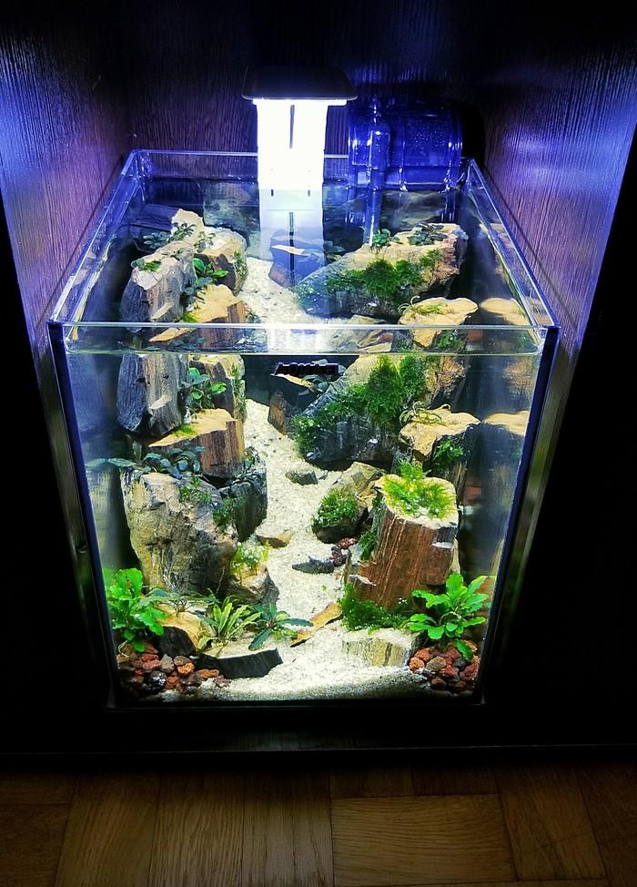 """Мини-аквариум """"Горное ущелье"""" Аквариум, Аквариумистика, Горы, Творчество, Длиннопост"""