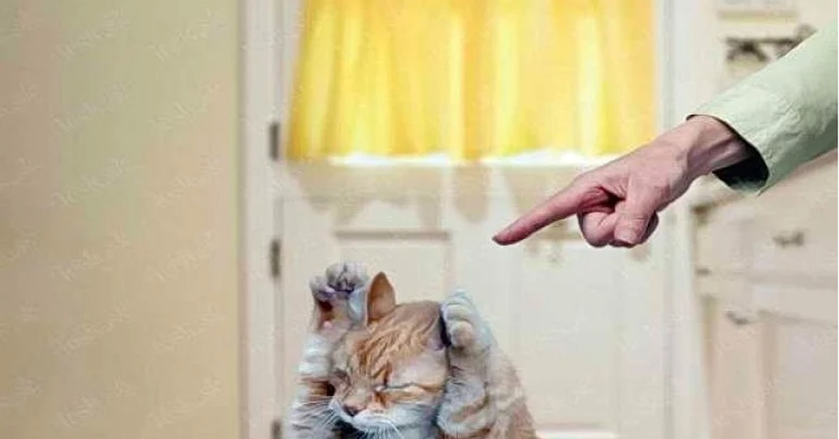 Кошка которую ругают картинки