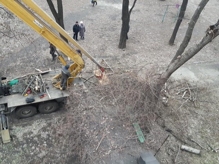 Через пень-колоду Коммунальщики, Спил дерева