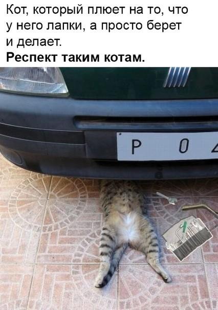 https://cs11.pikabu.ru/post_img/2019/02/20/9/1550675974194968651.jpg
