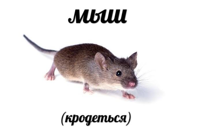 Мыш Мемы, Крыса, Домашние животные, Милота
