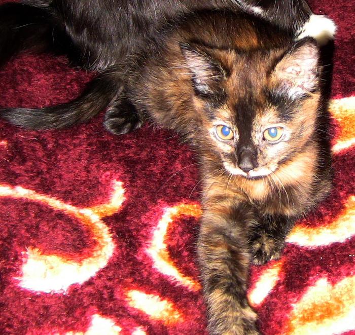А у нас сегодня кошка родила вчера котят. Котята, Семейство, Мелкие, Длиннопост, Кот, Домашние животные