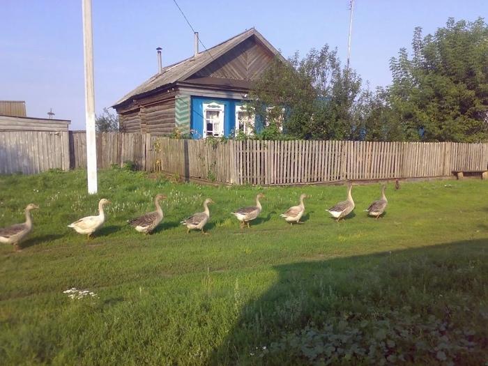 Каникулы в деревне Длиннопост, Деревня, Каникулы, Фотография