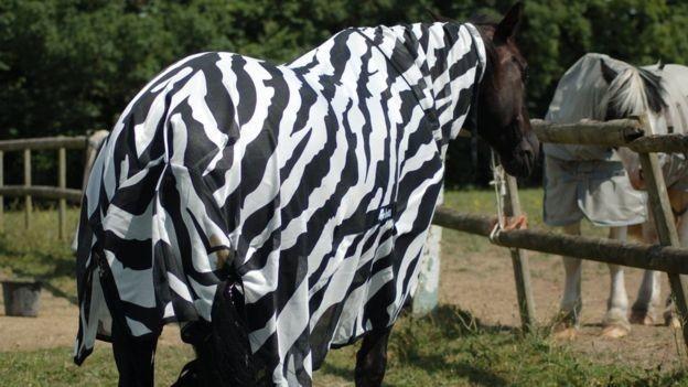 Хочу все знать #111. Учёные наконец разгадали, зачем зебрам полоски. Хочу все знать, Лошади, Зебра, Полосы, Насекомые, Интересное, Британские ученые, Длиннопост