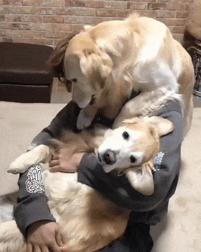 Существует два типа собак