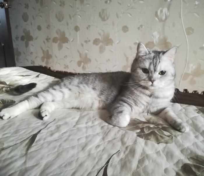 Красотка)
