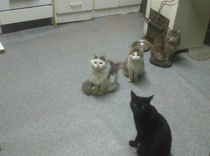 Банда и её главарь. Кот, Банда, Ожидание, Еда, Домашние животные