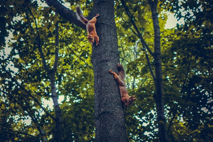 Белки в Нескучном саду Начинающий фотограф, Животные, Природа, Фотография, Белка