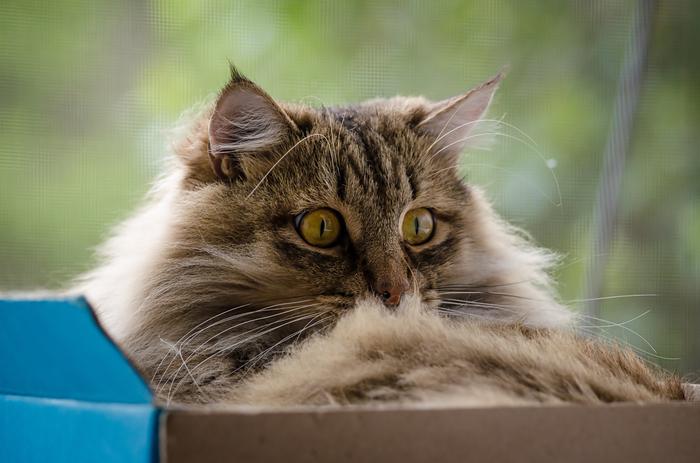 Летний кот Кот, Лето, Фотография, Длиннопост