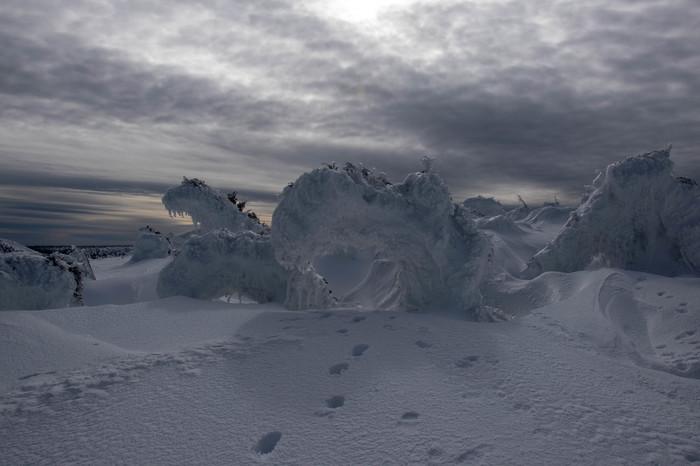 Деревья под снегом Зима, Горы, Фотография