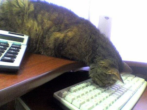 Кратко о том, как работает кошка в бухгалтерии управляющей компании.