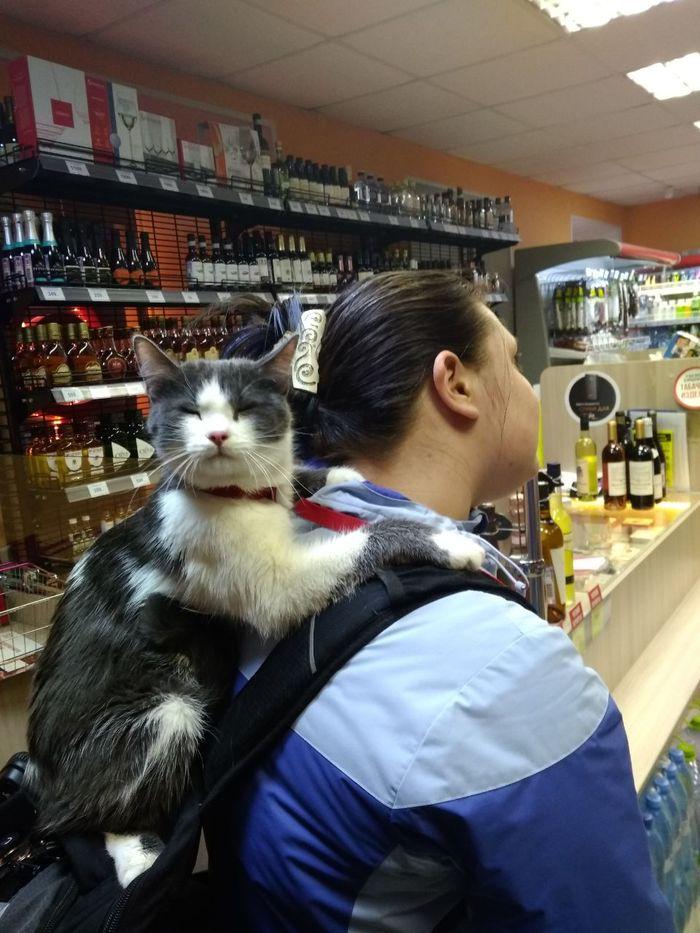 Благодать. Кот, Алкоголь, Прогулка, Счастье, Домашние животные