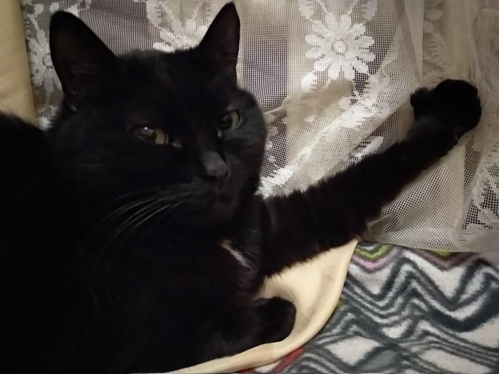 Бэн! Ай нид хэлп!! Подскажите успокоительные для кота, намечается переезд длиною в сутки(!) Ветеринария, Переезд, Успокоительное, Консультация, Кот, Ветеринарная помощь, Текст