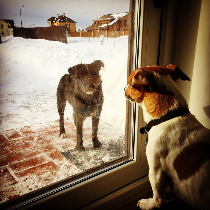 Собачья любовь. Зима стройка стоит. Стройка, Долевое строительство, Строительство дома, Строительство, Баня