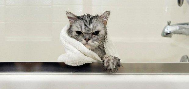 Как мы мылись... Кот, Хозяева, Блохи, Вода, Любовь, Длиннопост, Текст
