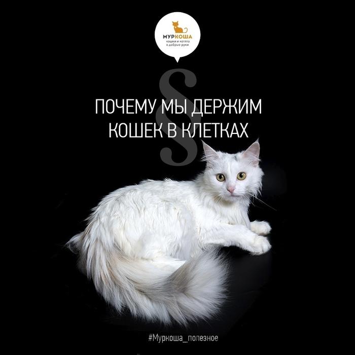 Почему мы держим кошек в клетках Муркоша, Приют муркоша, Кот, Полезное, Длиннопост, Помощь животным