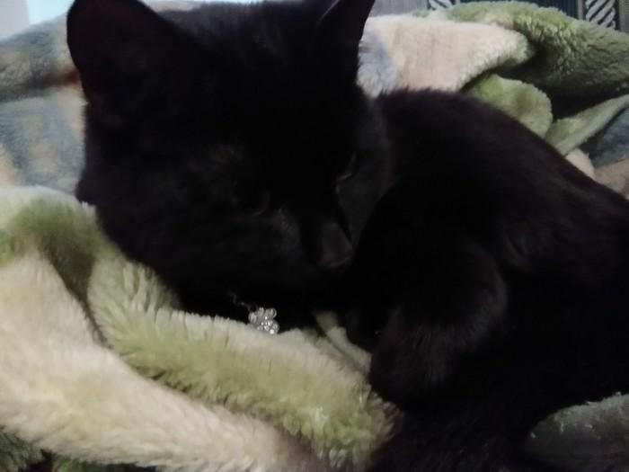 Тоскующий кот Кот, Тоска, Длиннопост