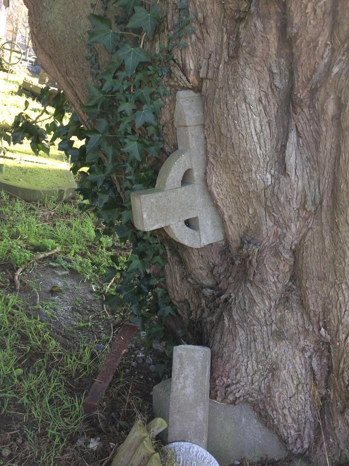 Дерево которое росло над могилой и прихватило надгробие с собой