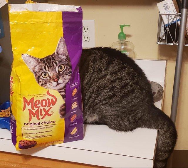 «Наконец-то я сфотографировал своего кота, смотрящего прямо в камеру»