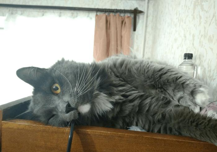 «Пять килограмм чистой ненависти»: хозяин сдаёт в аренду кота, и тот докажет, что киса — это не мило Кот, Аренда, Длиннопост