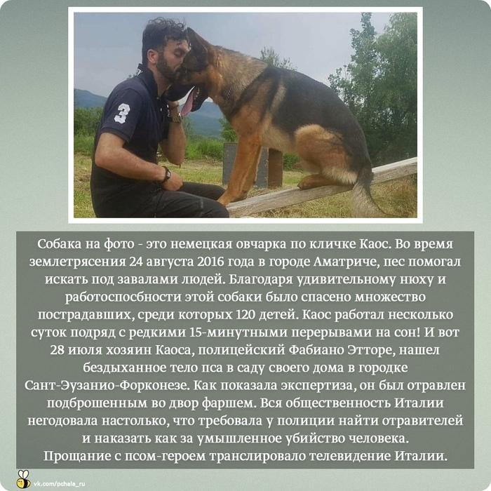 Пес-герой Каос