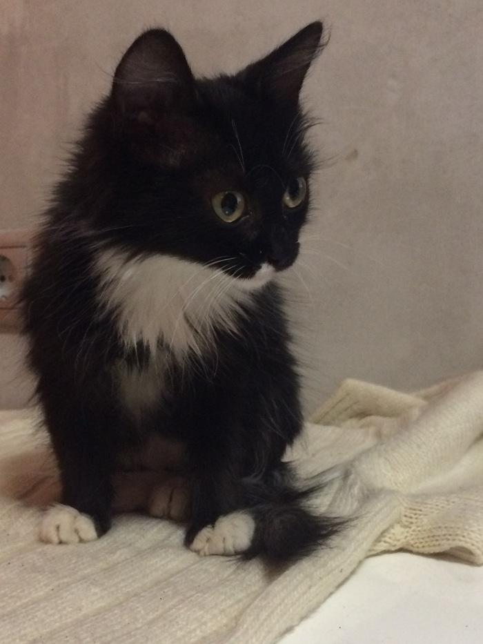 Спасённая мной кошка. Кот, Красавица, Повезло, Длиннопост