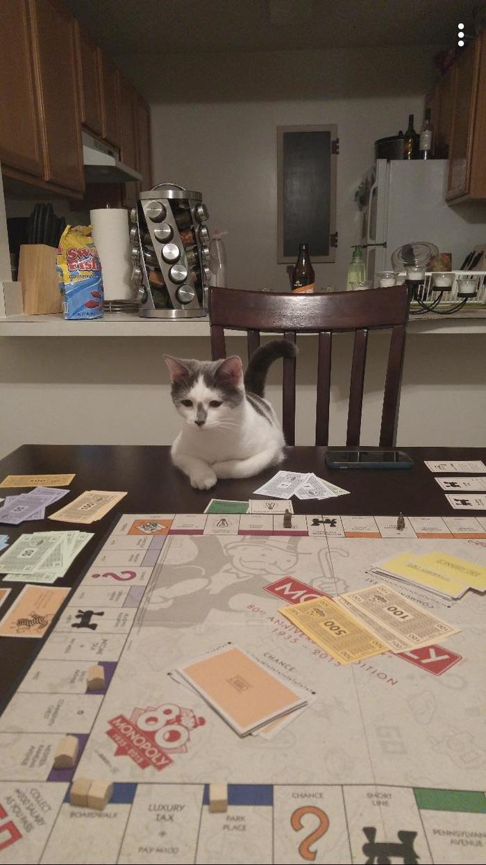 Я проиграла ему уже 2 партии. Чёртов пушистый капиталист!