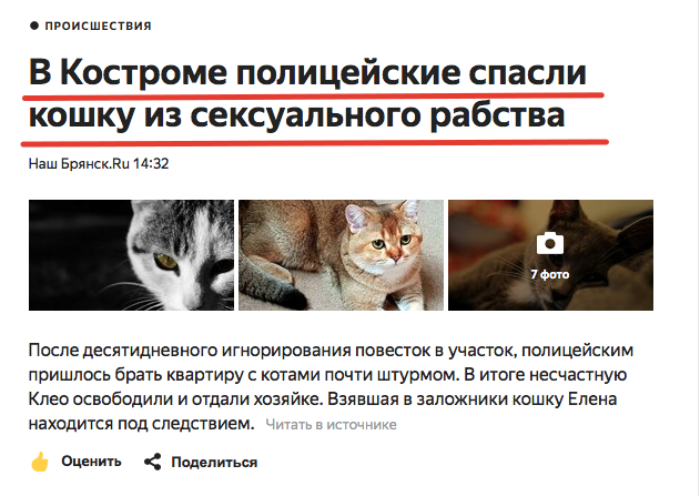Костромские полицейские спасли кошку от сексуального рабства Не новость, Кот, Кострома, Длиннопост, Домашние животные