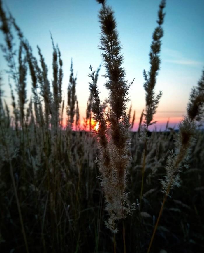 Скоро лето Лето, Закат, Мобильная фотография, Начинающий фотограф, Скоро Лето