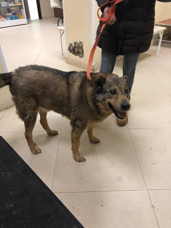 Пропала Собака Пропала собака, Пражская, Южная, Чертаново, Без рейтинга, Собака, Москва, Помогите найти