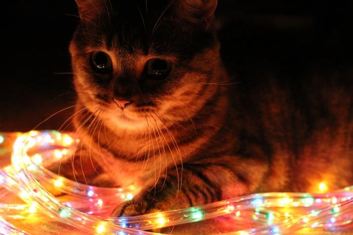Слава котам! ))