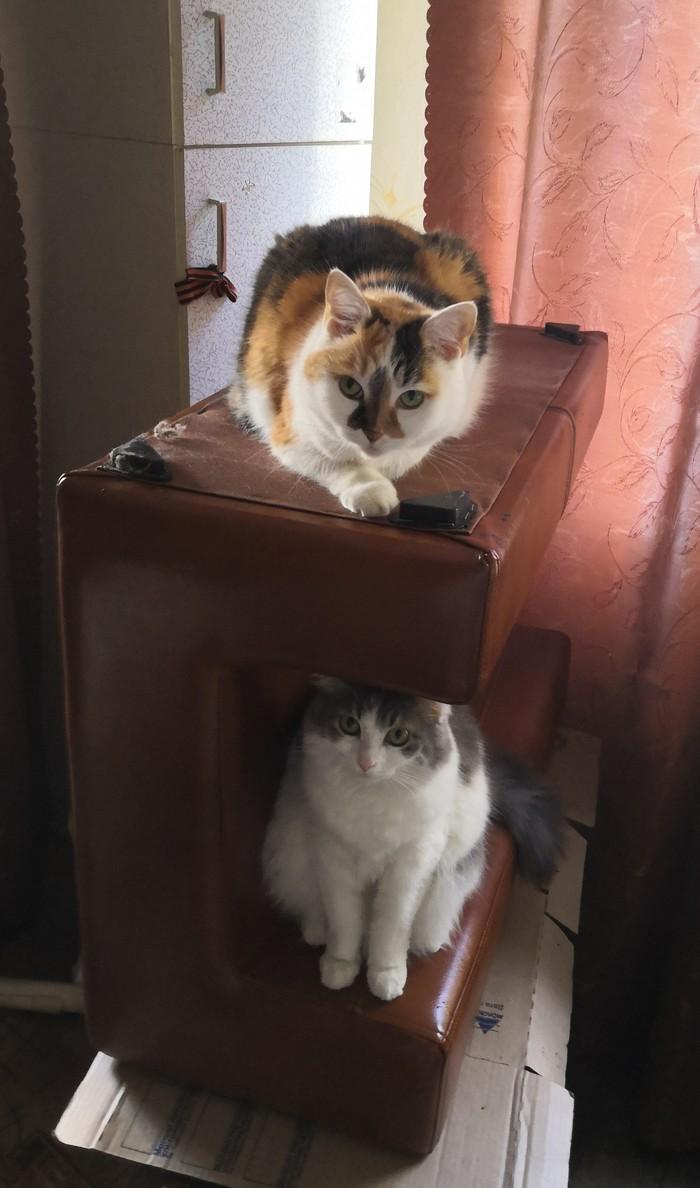 Поздравляю с днем кошек! Кот, Кошкин дом, Питомец