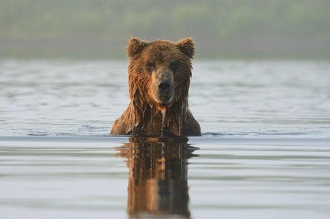 «Новая нефть»: в Кроноцком заповеднике на Камчатке хотят реализовать крупный проект по добыче рыбы Животные, Камчатка, Без рейтинга, Заповедник, Природа, Дикая природа, Длиннопост, Кроноцкий заповедник