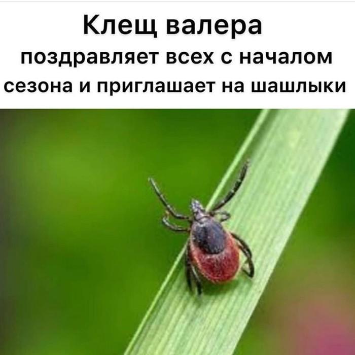 С первым днём весны Весна, Шашлык, Клещ