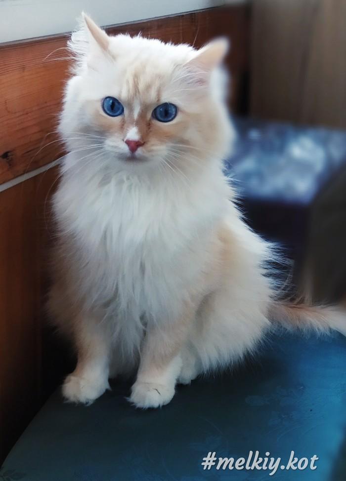 Доброго весеннего утра! Кот, Доброе утро, Фотография, Xiaomi, Длиннопост, Домашние животные