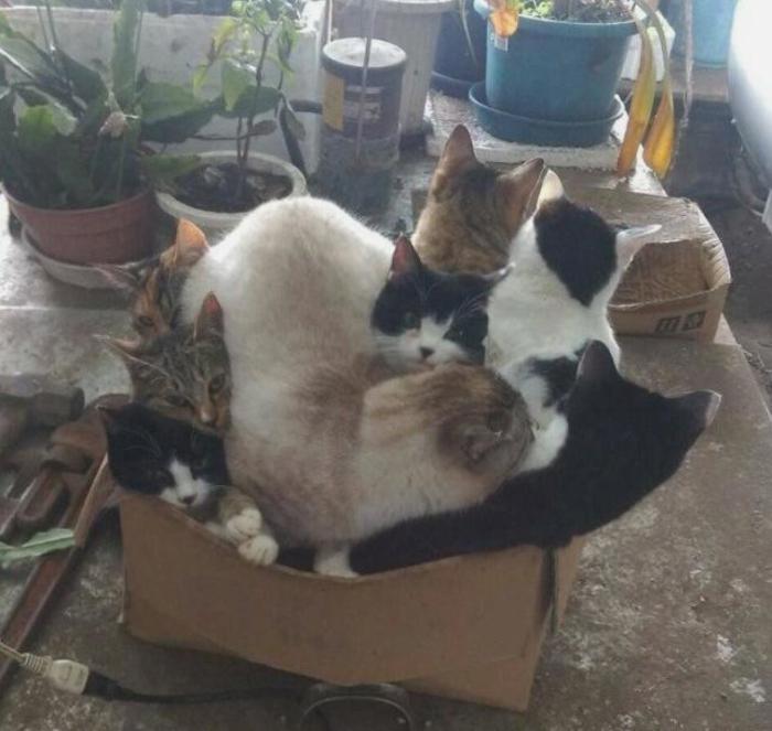 Утро. Маршрутка. Маршрутка, Анекдот, Кот, Коты это жидкость, Коробка и кот, Домашние животные