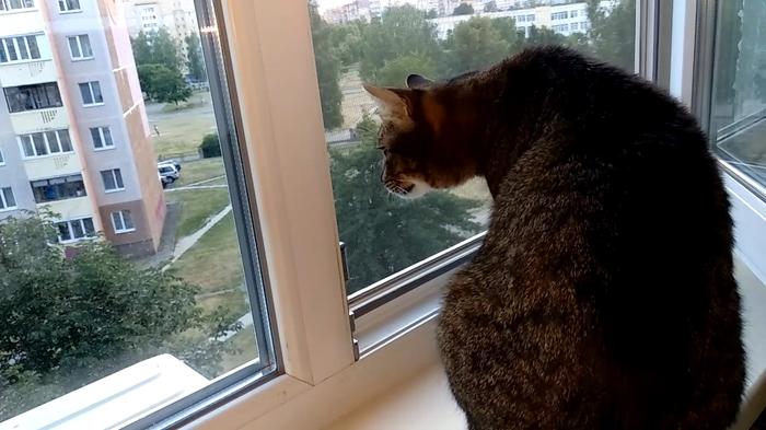 Ну ты посмотри!!! Опять соседская кошка только утром домой возвращается))