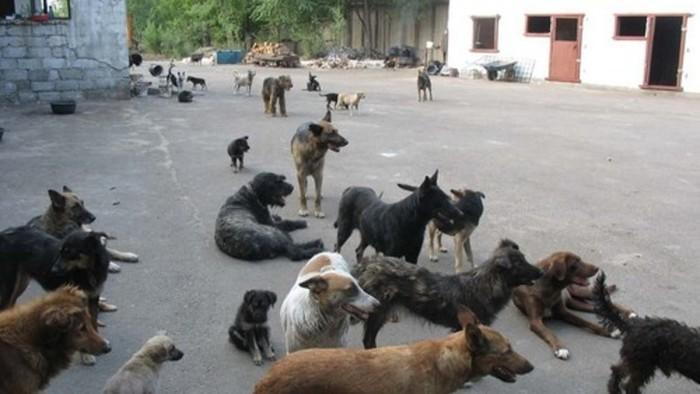 Бродячие собаки начали активно уничтожать дикую природу! Бродячие собаки, Животные, Зоошиза, Зоозащитники, Косуля, Фауна, Охрана природы, Длиннопост