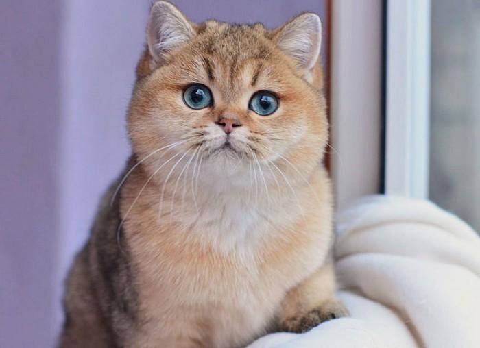Знакомьтесь, кот - Филипп.