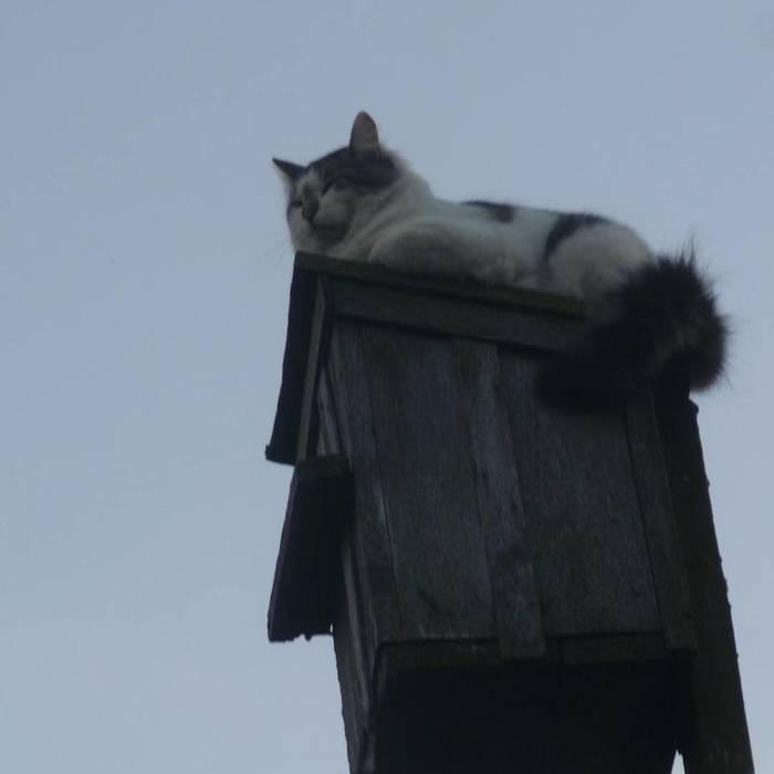 Преклонитесь перед великой котовостью! Животные, Кот, Русские коты, Деревенские коты, Длиннопост, Домашние животные