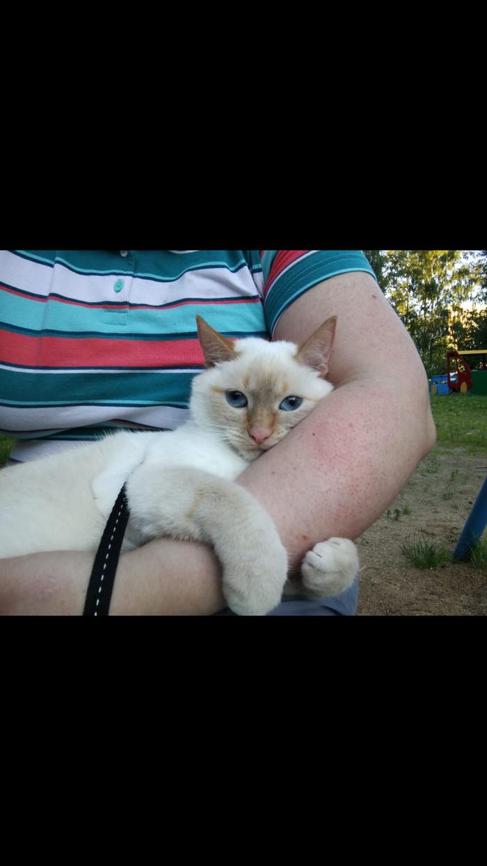 Пропала кошка Краснодар Без рейтинга, Пропажа, Помогите найти, Помощь животным, Краснодар
