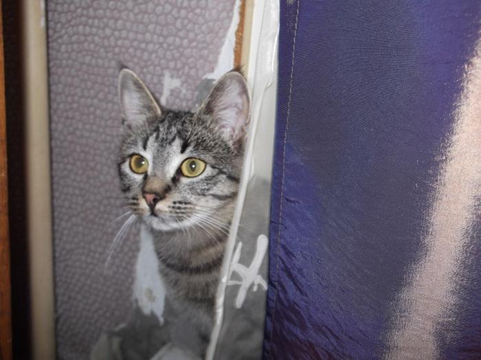 Как мы котанов знакомили и вместе жить приучали Кот, Длиннопост, Тест