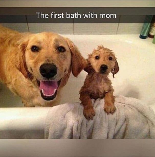 Первое купание с мамой