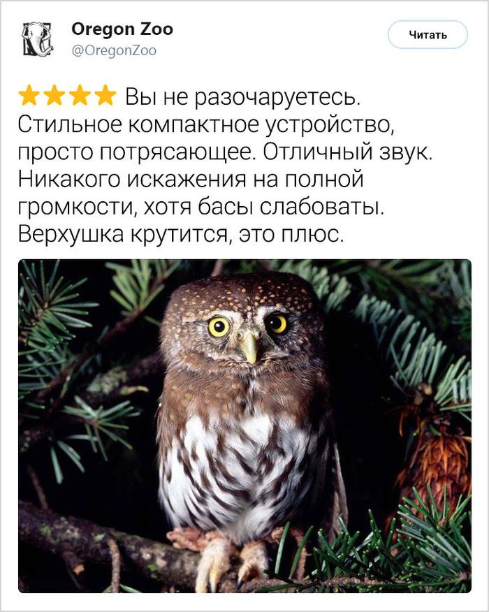 Отзывы о животных в стиле AliExpress ADME, Животные, Отзывы на Алиэкспресс, Длиннопост