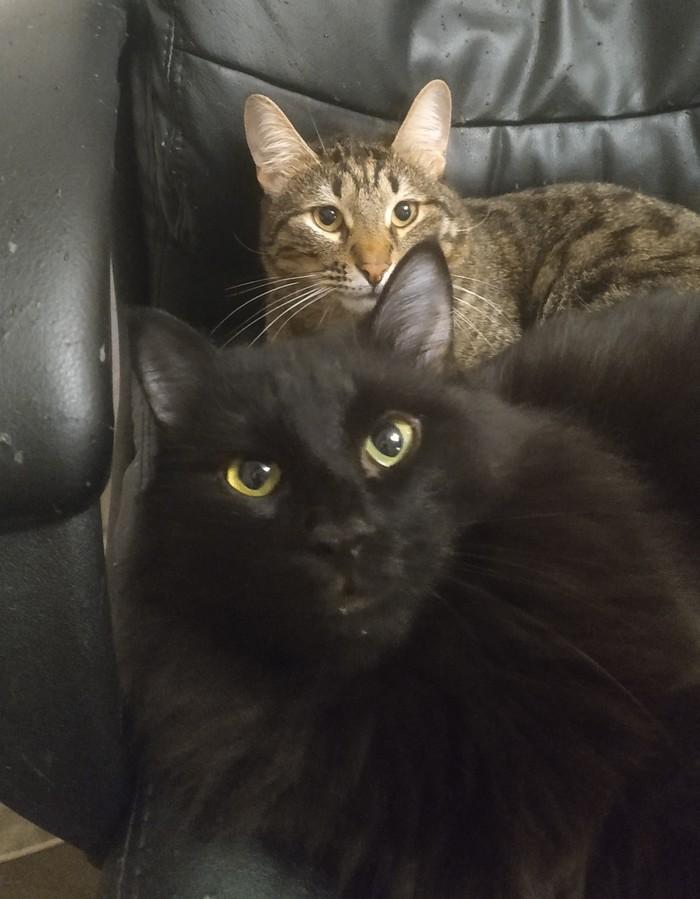 Теперь это наше кресло Кот, Животные, Фотография