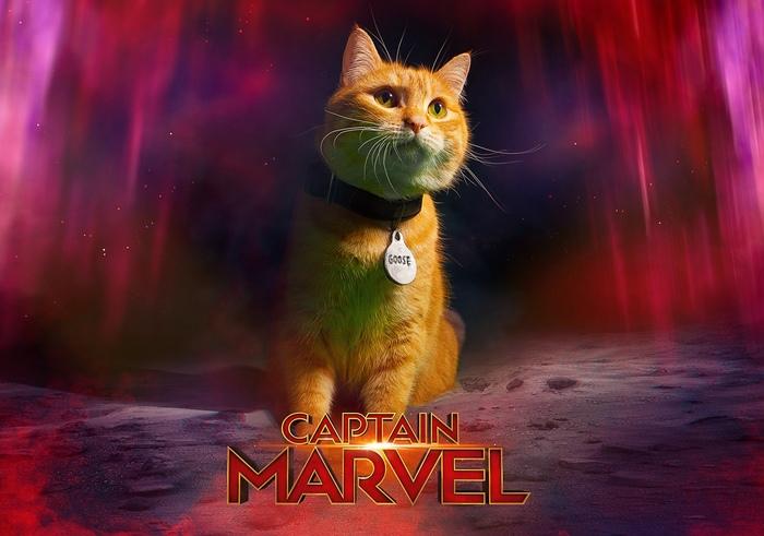 Косплей на кота Гуся из Капитана Марвел Русский косплей, Косплей, Капитан марвел, Кот